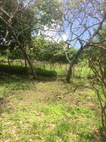Fazenda-Granja-Sítio-Chácara 12 Hectares Aliança, Aceito Imóvel ou Automóvel - Foto 11