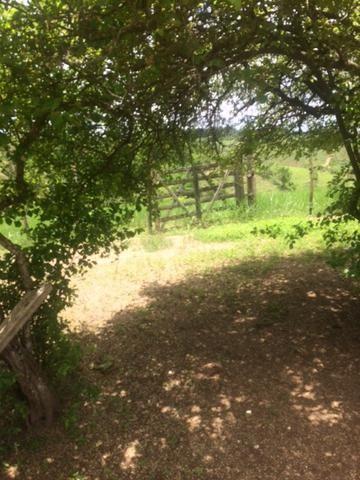 Fazenda-Granja-Sítio-Chácara 12 Hectares Aliança, Aceito Imóvel ou Automóvel - Foto 15