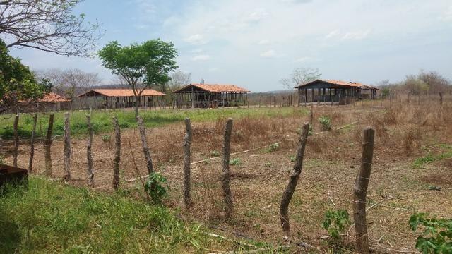 Chácara 50ha Piscina PI-113 10km de José de Freitas - Foto 14