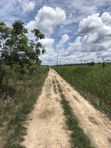 Vendo área de fazenda na Br 319 AM próximo a Porto Velho/Ro - Foto 14