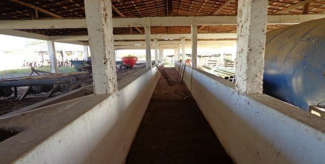 Fazenda Fernando Pedrosa, 489 Hectares, Escriturada, 7km Rio Pajeú, Açude, Casa Sede - Foto 8