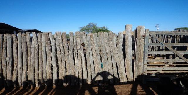 Fazenda Fernando Pedrosa, 489 Hectares, Escriturada, 7km Rio Pajeú, Açude, Casa Sede - Foto 20