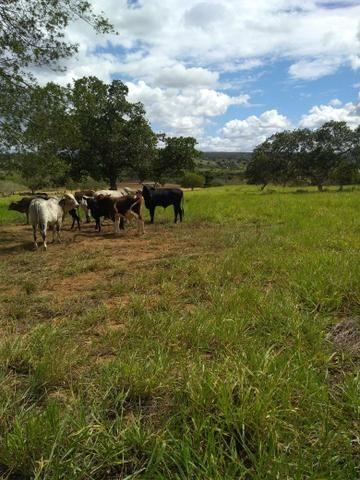 Fazenda em Ribeira do Pombal - Foto 15