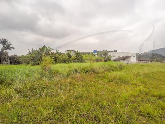 Terreno com aproximadamente 2.500 m², no bairro badenfurt . - Foto 8