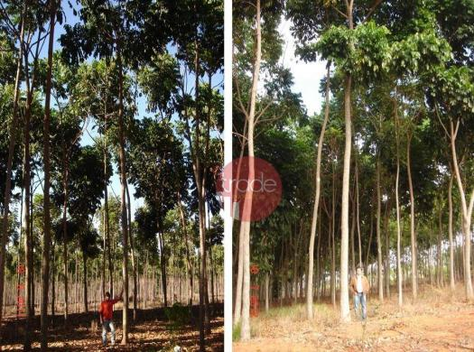 Fazenda rural à venda, Centro, Buritizeiro. - Foto 5