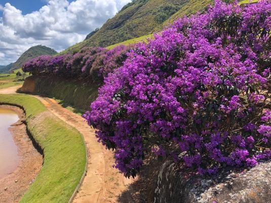 Linda Chácara na Montanhas Capixabas, com uma extensa área de hortas e pomares, com um lin - Foto 12