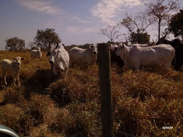 Fazenda abeira do asfalto na estrada da Guia 67 km de Cuiabá - Foto 11