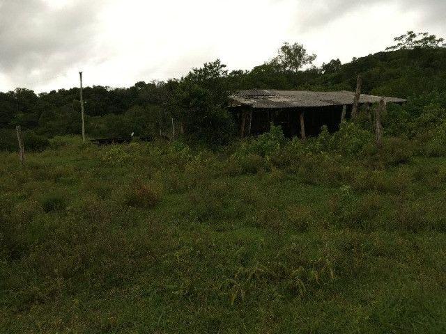 Sítio em Santo Antônio da Patrulha/RS com 7Ha com Arroio e Açude. Peça o Vídeo Aéreo - Foto 4