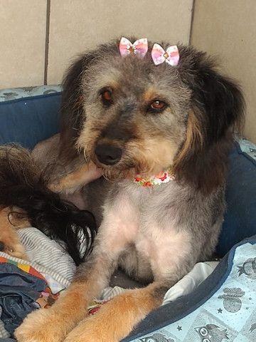 Linda cachorrinha para adoção - Foto 2