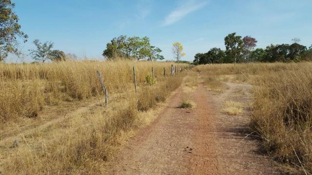 Fazenda com 355 ha na saída para Paraíso - Foto 8