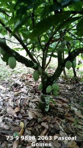Fazenda a venda Bahia - Foto 6