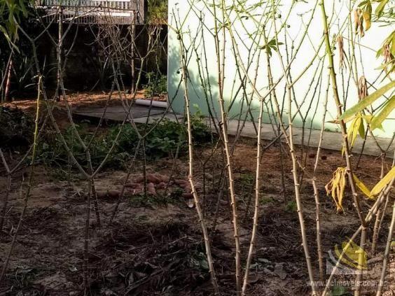 Casa para Venda em Imbituba, ALTO ARROIO, 3 dormitórios, 2 banheiros, 2 vagas - Foto 15