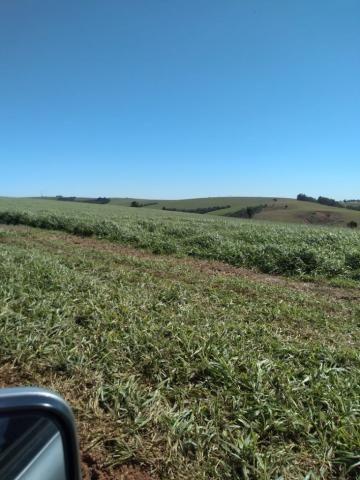 Fazenda à venda entre Itabera e Taquarituba/SP - Foto 7