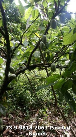 Fazenda a venda Bahia - Foto 9