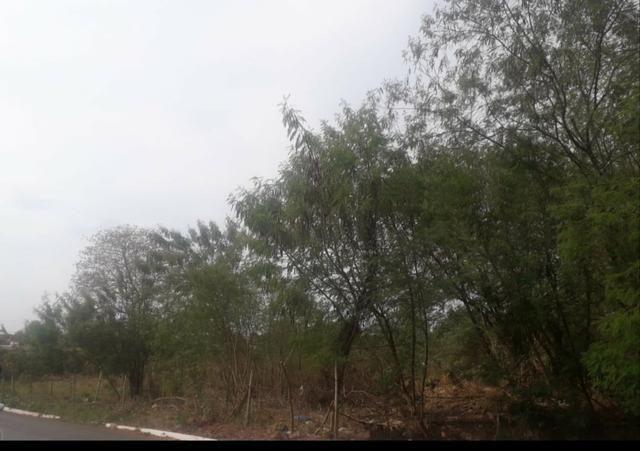 Vendo terreno de 1.000 m² no bairro Mapim - Várzea Grande - Foto 2