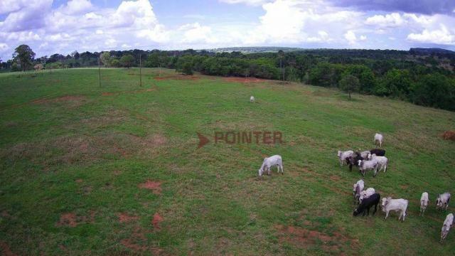 Fazenda à venda, 5614400 m² por R$ 15.000.000,00 - Zona Rural - Cachoeira Alta/GO - Foto 11