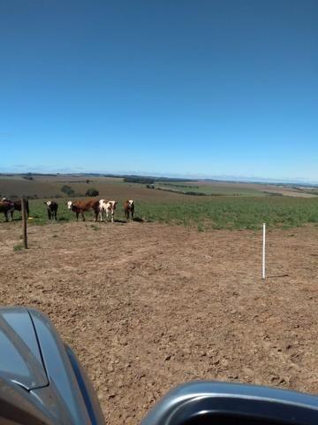 Fazenda à venda entre Itabera e Taquarituba/SP - Foto 6