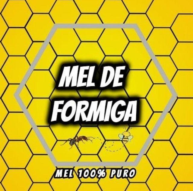 Mel Puro 500g Silvestre - Foto 4