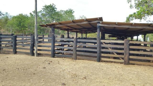 Fazenda com 355 ha na saída para Paraíso - Foto 6
