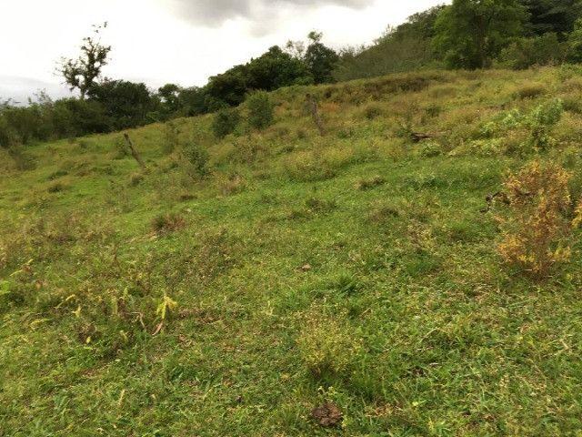 Sítio em Santo Antônio da Patrulha/RS com 7Ha com Arroio e Açude. Peça o Vídeo Aéreo - Foto 5