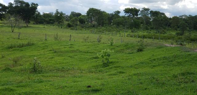 Chácara 30 ha - R$ 430.000,00 - Foto 13