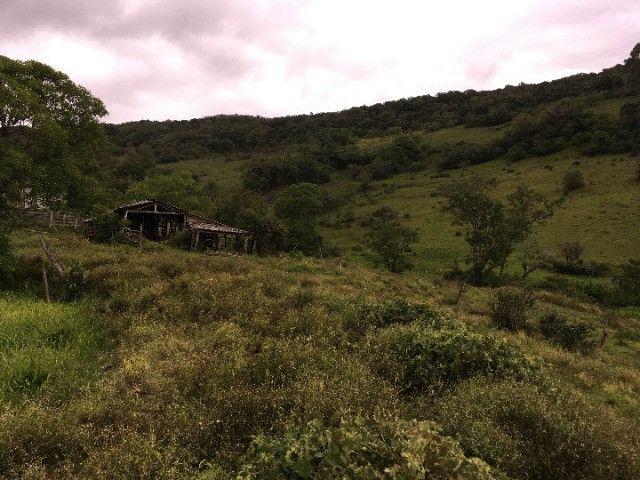 Sítio em Santo Antônio da Patrulha/RS com 7Ha com Arroio e Açude. Peça o Vídeo Aéreo - Foto 3