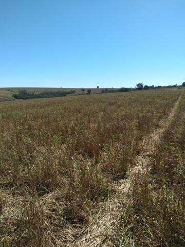 Fazenda à venda entre Itabera e Taquarituba/SP - Foto 3