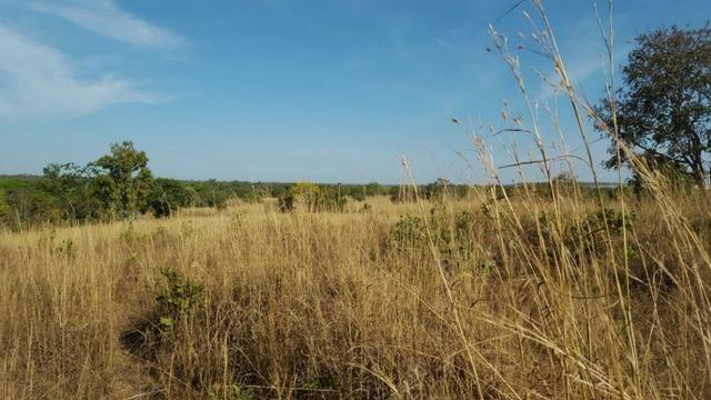 Fazenda com 355 ha na saída para Paraíso - Foto 3
