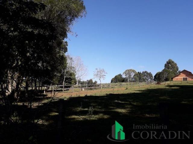 Haras em Campina Grande do Sul - Foto 11