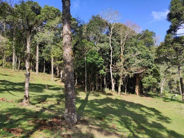 Chácara em São José dos Pinhais 20.000 metros quadrados - Foto 3