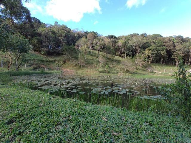 Chácara em São José dos Pinhais 20.000 metros quadrados - Foto 7
