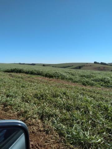 Fazenda à venda entre Itabera e Taquarituba/SP - Foto 5