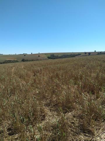 Fazenda à venda entre Itabera e Taquarituba/SP - Foto 9