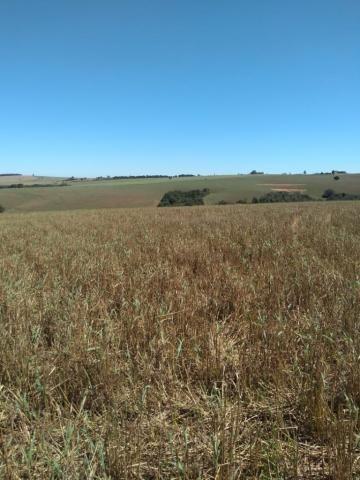 Fazenda à venda entre Itabera e Taquarituba/SP - Foto 10