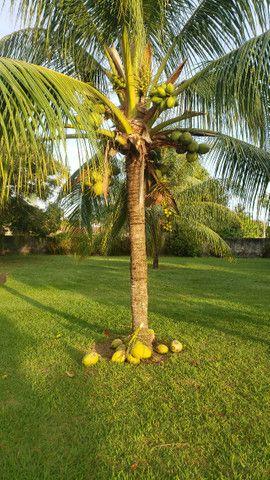 Natureza e Praia Casa Confortável Ilha de Itaparica - Foto 11
