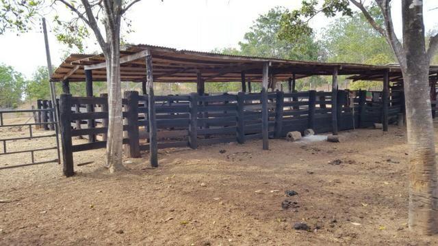 Fazenda com 355 ha na saída para Paraíso - Foto 5