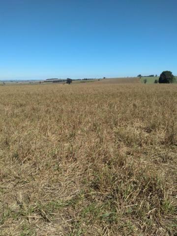 Fazenda à venda entre Itabera e Taquarituba/SP - Foto 17