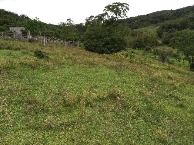 Sítio em Santo Antônio da Patrulha/RS com 7Ha com Arroio e Açude. Peça o Vídeo Aéreo - Foto 14
