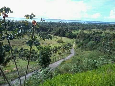 Espetacular fazenda, Salinas das Margaridas Bahia - Foto 5
