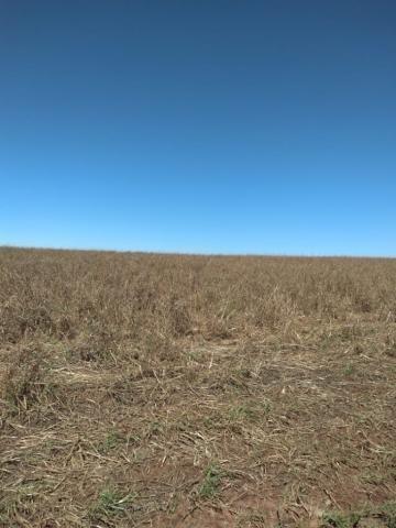 Fazenda à venda entre Itabera e Taquarituba/SP - Foto 15