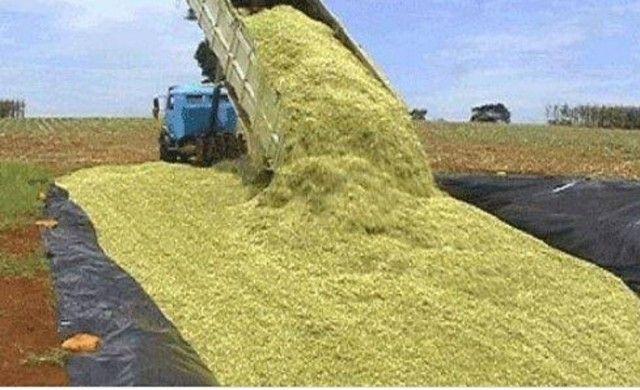 Silagem de milho a granel