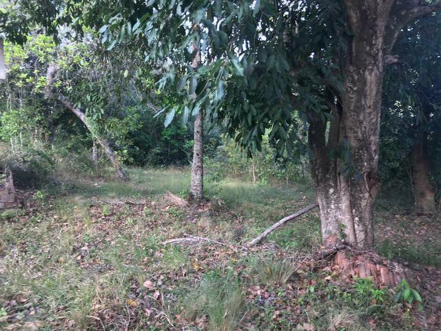 Vendo Sítio de 04ha próximo ao Restaurante Capão em Goiana - Foto 3