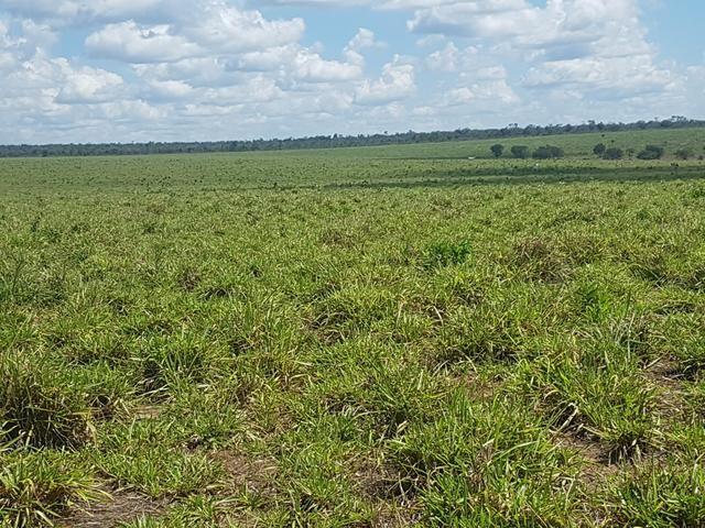 Fazenda 2500 ha Guaraí -TO - Foto 4