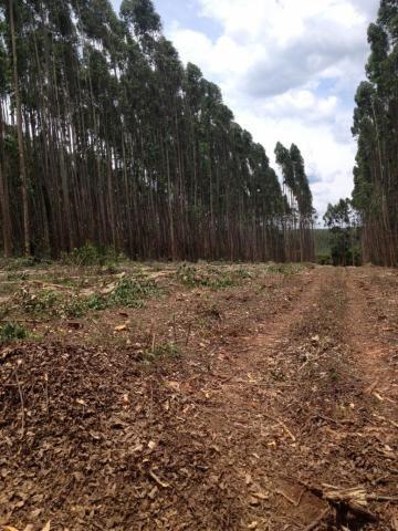 Fazenda  - Capão Bonito, Centro