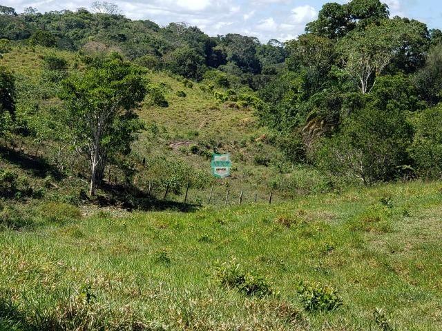 Ilhéus. Fazenda com 368 Hectares cultivo de cacau e gado - Foto 18