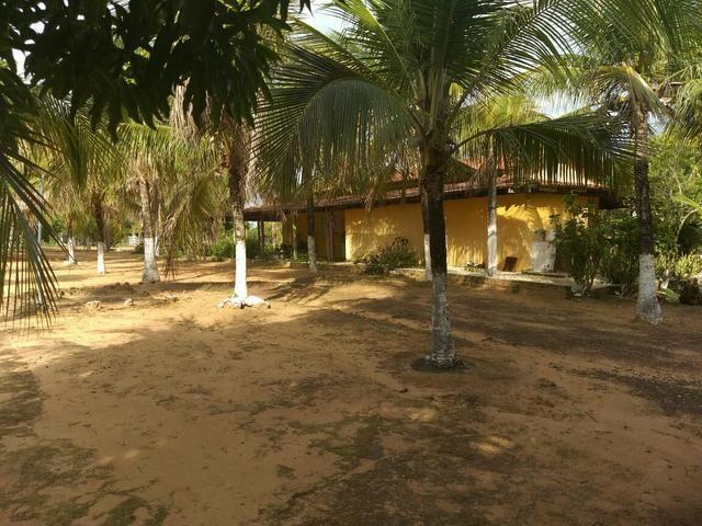 Faz. 12 alqueires à 30 km de Imperatriz- porteira fechada * - Foto 7