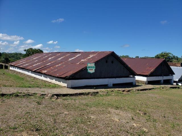 Ilhéus. Fazenda com 368 Hectares cultivo de cacau e gado - Foto 10