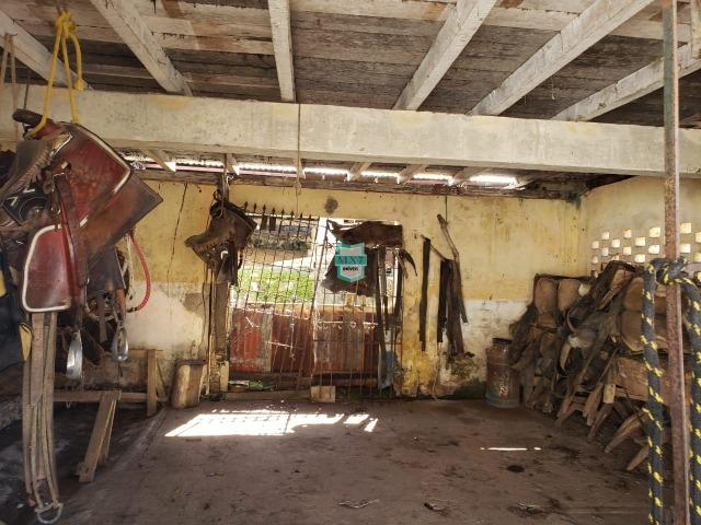 Ilhéus. Fazenda com 368 Hectares cultivo de cacau e gado - Foto 13
