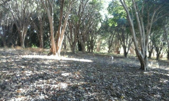 Lindo sitio 48.000m2 com casarao antigo em serra negra sp - Foto 8