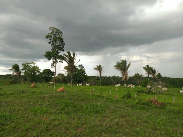 Faz. 12 alqueires à 30 km de Imperatriz- porteira fechada * - Foto 4